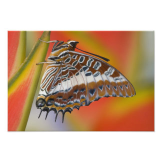Sammamish, Washington. Tropical Butterflies 35 Photo Print