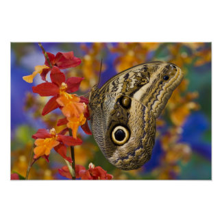 Sammamish, Washington. Tropical Butterflies 35 Poster