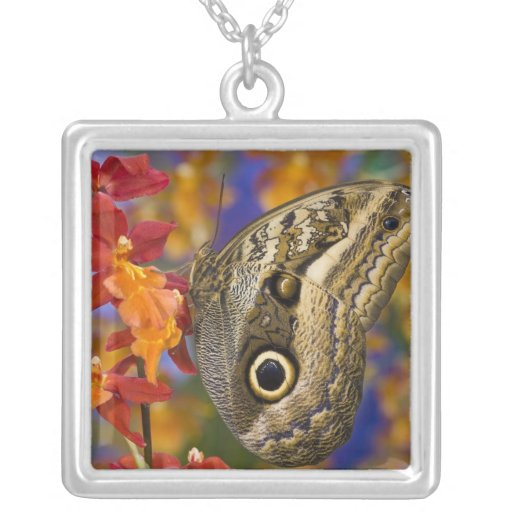 Sammamish, Washington. Tropical Butterflies 35 Square Pendant Necklace