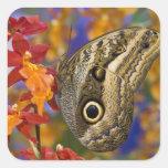 Sammamish, Washington. Tropical Butterflies 35 Square Sticker