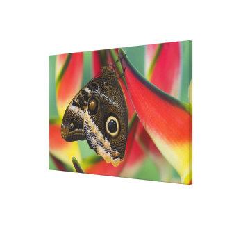 Sammamish, Washington. Tropical Butterflies 36 Canvas Print