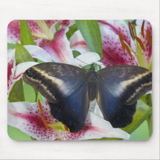 Sammamish, Washington. Tropical Butterflies 36 Mouse Pad