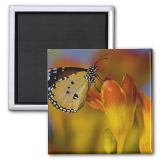 Sammamish, Washington. Tropical Butterflies 39 2 Inch Square Magnet