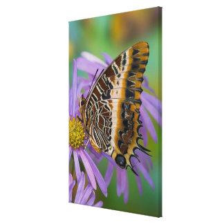 Sammamish Washington Tropical Butterflies 3 Canvas Print