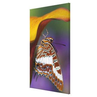 Sammamish, Washington. Tropical Butterflies 3 Canvas Print