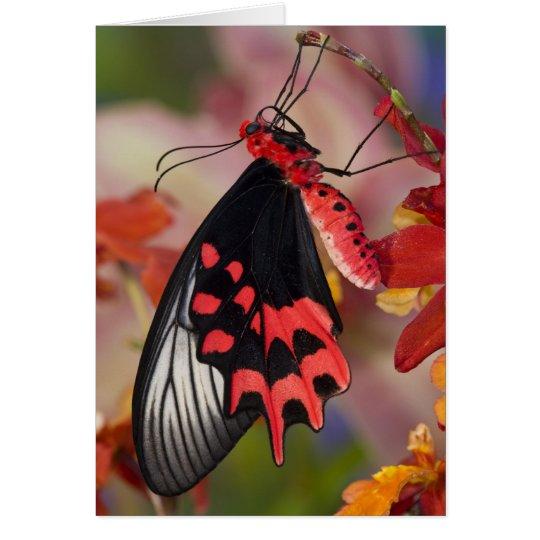 Sammamish, Washington. Tropical Butterflies 3 Card
