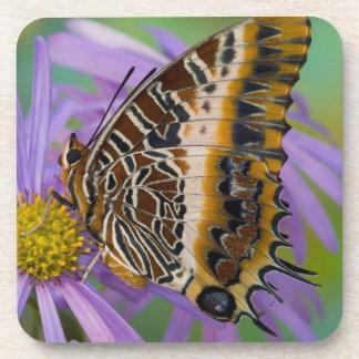 Sammamish Washington Tropical Butterflies 3 Drink Coaster