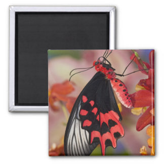 Sammamish, Washington. Tropical Butterflies 3 Refrigerator Magnet