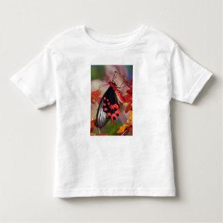 Sammamish, Washington. Tropical Butterflies 3 Toddler T-shirt