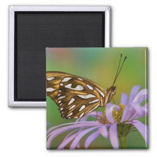 Sammamish, Washington. Tropical Butterflies 40 Fridge Magnets