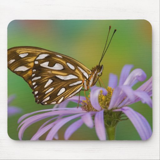 Sammamish, Washington. Tropical Butterflies 40 Mouse Pad
