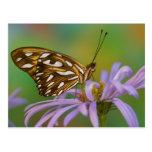 Sammamish, Washington. Tropical Butterflies 40 Postcard