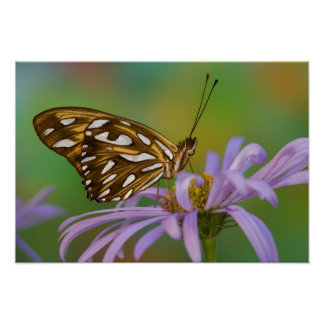 Sammamish, Washington. Tropical Butterflies 40 Poster
