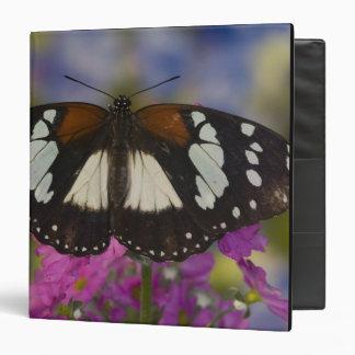 Sammamish, Washington. Tropical Butterflies 41 3 Ring Binders