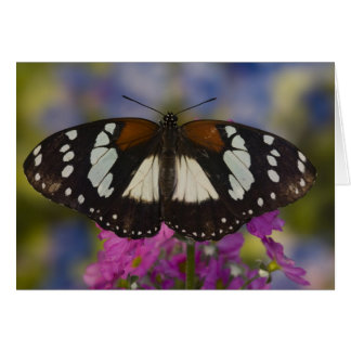 Sammamish, Washington. Tropical Butterflies 41 Card