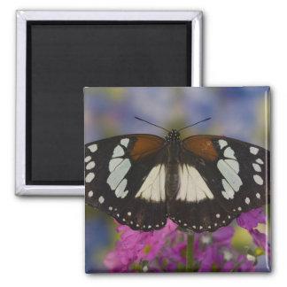 Sammamish, Washington. Tropical Butterflies 41 Magnet