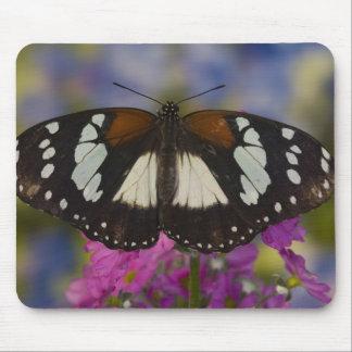 Sammamish, Washington. Tropical Butterflies 41 Mousepads