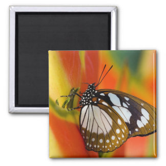 Sammamish, Washington. Tropical Butterflies 42 2 Inch Square Magnet