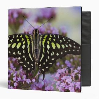 Sammamish, Washington. Tropical Butterflies 43 3 Ring Binders