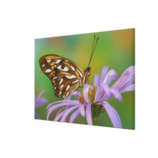 Sammamish, Washington. Tropical Butterflies 44 Canvas Print