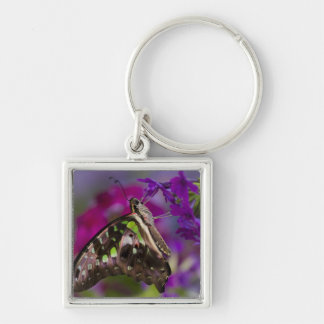 Sammamish, Washington. Tropical Butterflies 45 Keychain