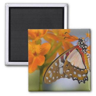 Sammamish, Washington. Tropical Butterflies 47 Refrigerator Magnet