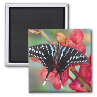 Sammamish, Washington. Tropical Butterflies 48 2 Inch Square Magnet