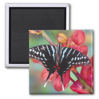 Sammamish, Washington. Tropical Butterflies 48 Refrigerator Magnet