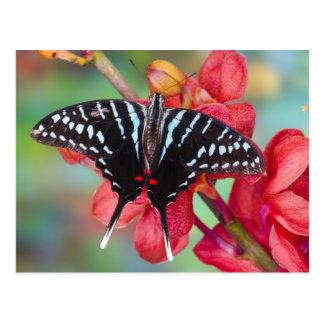 Sammamish, Washington. Tropical Butterflies 48 Postcard