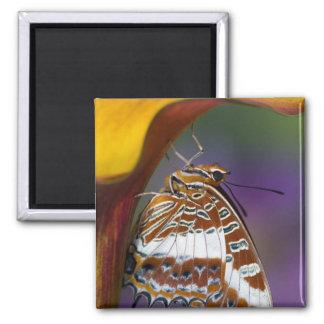 Sammamish, Washington. Tropical Butterflies 4 Magnet