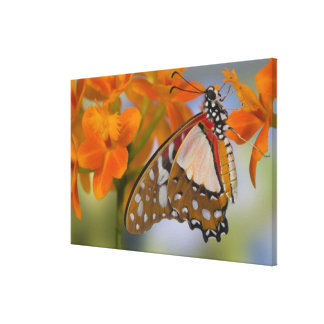 Sammamish, Washington. Tropical Butterflies 51 Canvas Print