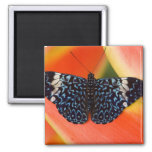 Sammamish, Washington. Tropical Butterflies 53 2 Inch Square Magnet