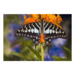 Sammamish, Washington. Tropical Butterflies 53 Photo Print