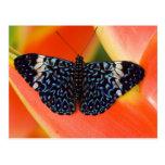 Sammamish, Washington. Tropical Butterflies 53 Postcard