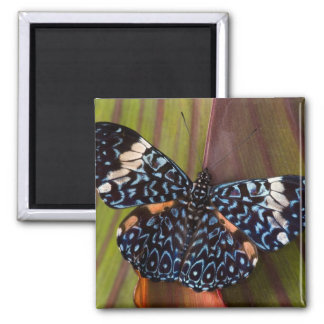 Sammamish, Washington. Tropical Butterflies 54 2 Inch Square Magnet
