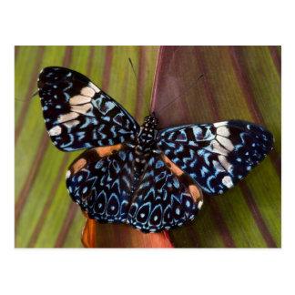 Sammamish, Washington. Tropical Butterflies 54 Postcard