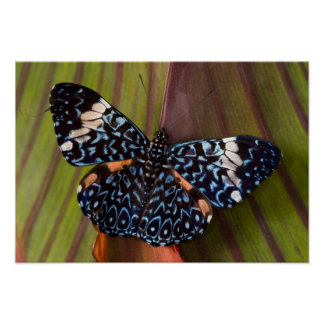 Sammamish, Washington. Tropical Butterflies 54 Poster