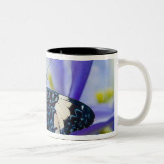 Sammamish, Washington. Tropical Butterflies 56 Mugs