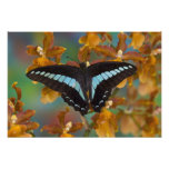 Sammamish, Washington. Tropical Butterflies 56 Photo Print