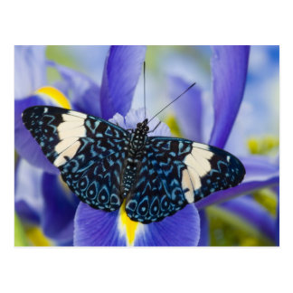Sammamish, Washington. Tropical Butterflies 56 Postcard