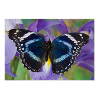 Sammamish, Washington. Tropical Butterflies 57 Poster