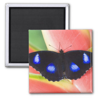 Sammamish, Washington. Tropical Butterflies 58 2 Inch Square Magnet