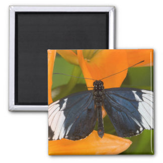 Sammamish, Washington. Tropical Butterflies 59 2 Inch Square Magnet