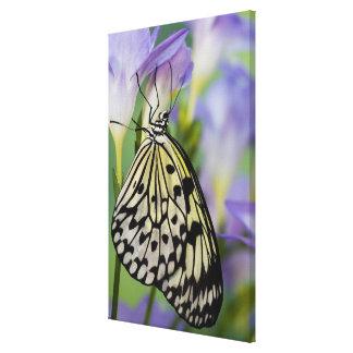 Sammamish, Washington. Tropical Butterflies 5 Canvas Prints