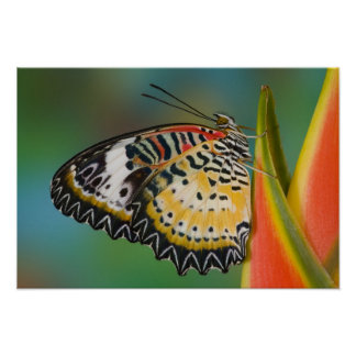 Sammamish, Washington. Tropical Butterflies 5 Poster