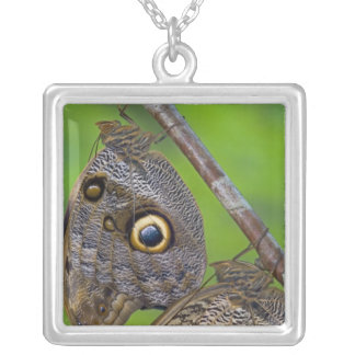 Sammamish, Washington. Tropical Butterflies 5 Silver Plated Necklace
