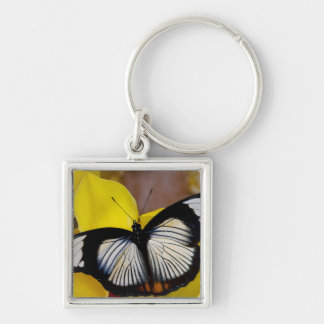 Sammamish, Washington. Tropical Butterflies 62 Keychain