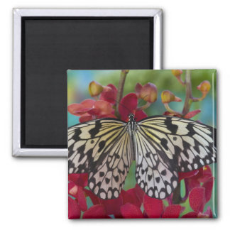 Sammamish, Washington. Tropical Butterflies 63 2 Inch Square Magnet
