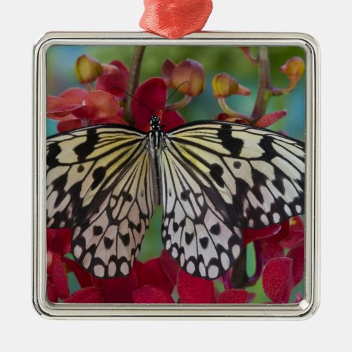 Sammamish, Washington. Tropical Butterflies 63 Metal Ornament