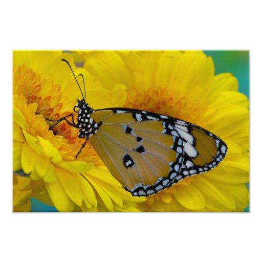 Sammamish, Washington. Tropical Butterflies 63 Photo Print